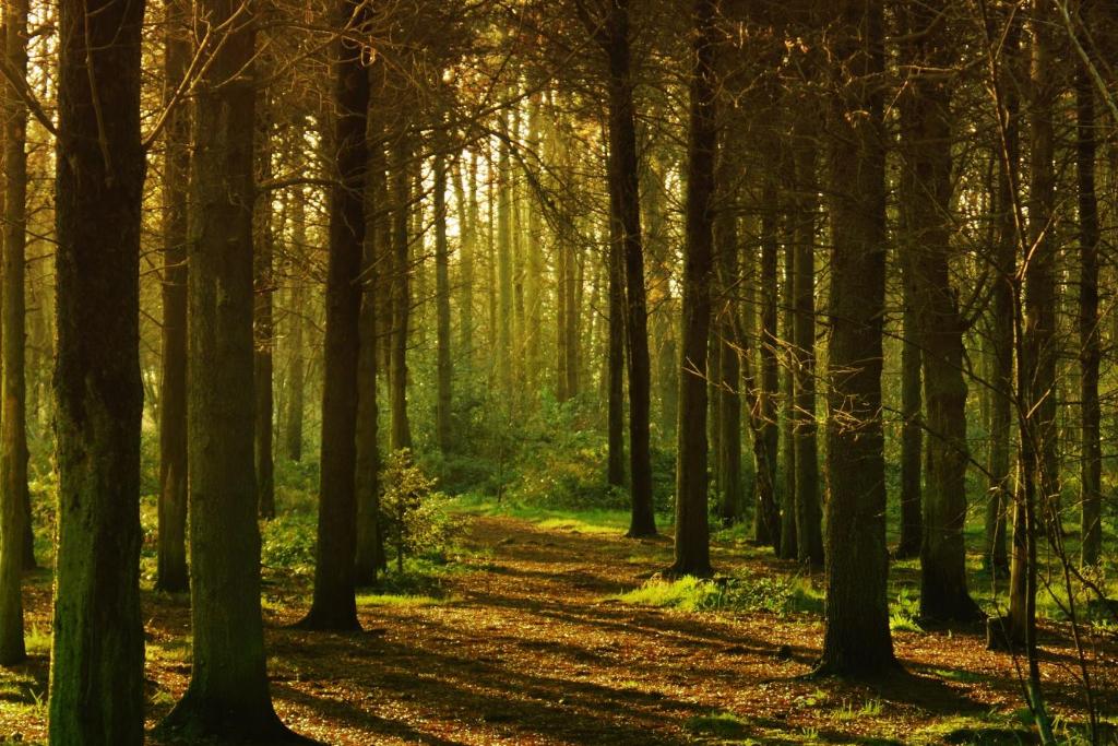 parquet_forêt